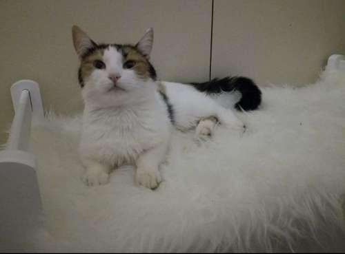 Kissa Karkasi